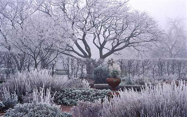 winter view garden